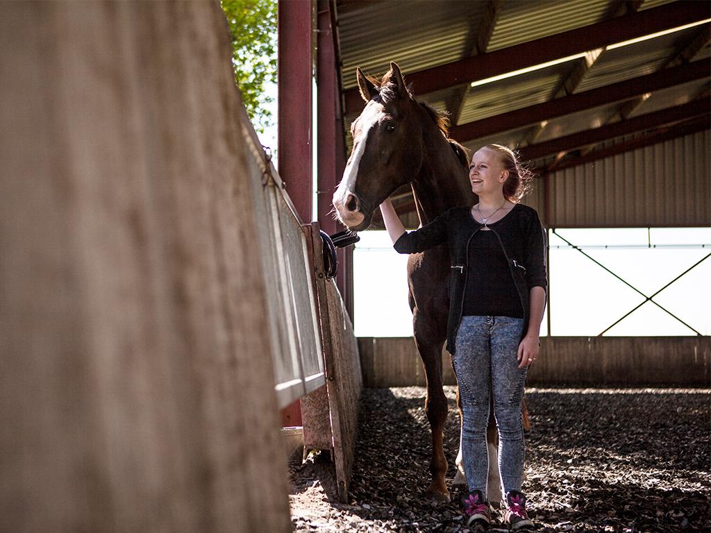 paarden in de zorg groot